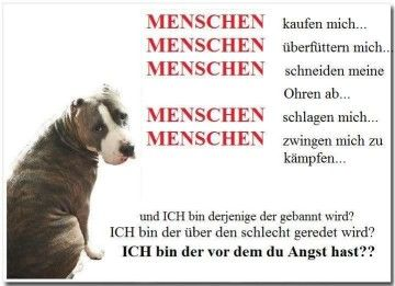 Kampfhunde Schweiz Listenhund Sozialisierung Tierschutz Hundepsychologie Ostschweiz St Gallen Hundeschule Manuela Albrecht Wittenbach Sg